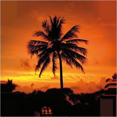 Palme & Sonnenuntergang 1