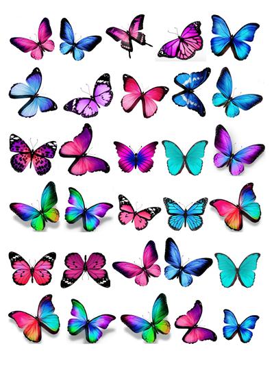 Schmetterlinge blau / rosa