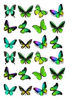 Schmetterlinge grün