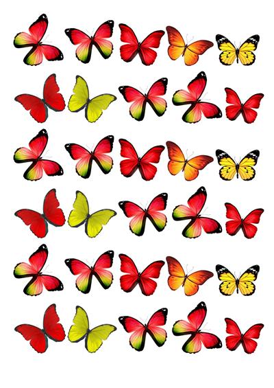 Schmetterlinge rot / gelb