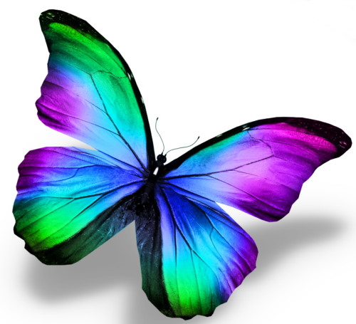 Bunter Schmetterling 3