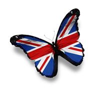 Schmetterling England