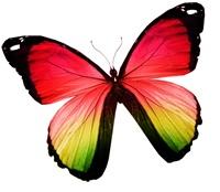 Grün / Gelb / Roter Schmetterling