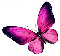 Pink / Lila / Rosa Schmetterling