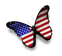 Schmetterling USA